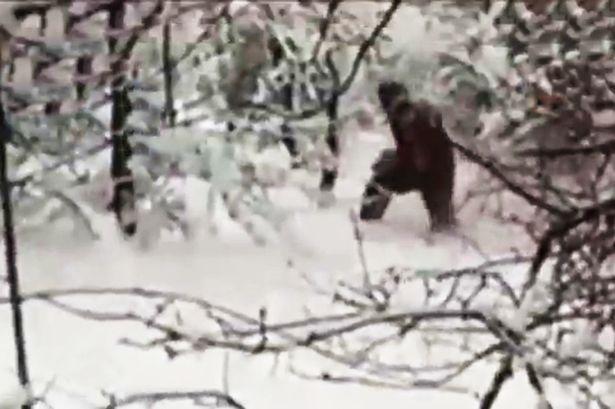 Adygeisk-Yeti-footage