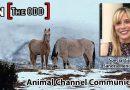 Animal Channel Communicator